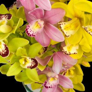 orchid gw